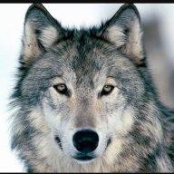 Wolfmind